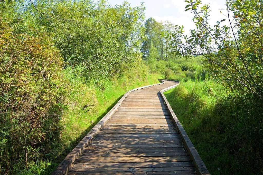 Mercer Slough Park Trail
