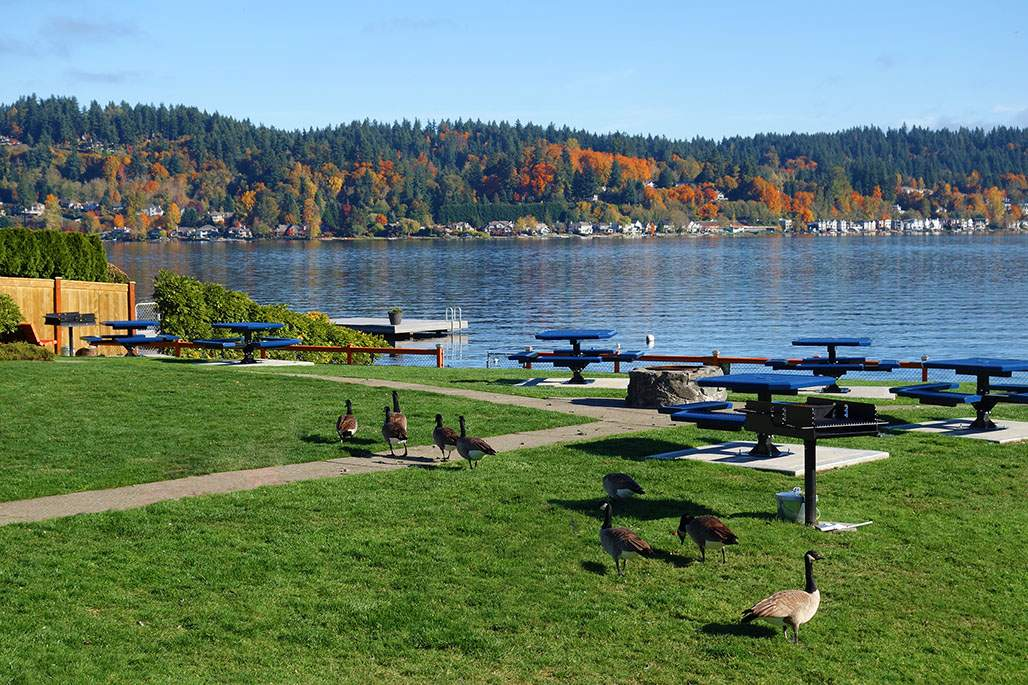 Sammamish Beach Club Park